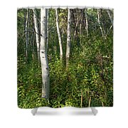 Aspen Solitude Shower Curtain