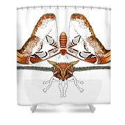 Atlas Moth2 Shower Curtain