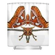 Atlas Moth7 Shower Curtain