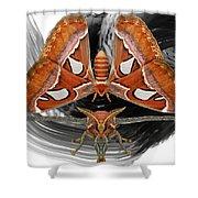 Atlas Moth8 Shower Curtain