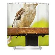 Australian Kookaburra Shower Curtain