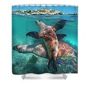Australian Sea Lion Pair, Coral Coast Shower Curtain
