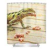 Australian Water Dragon Shower Curtain