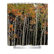 Autumn As The Seasons Change Shower Curtain