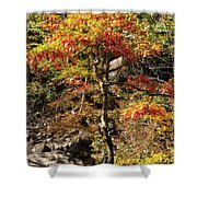 Autumn Color In Smoky Mountains National Park Shower Curtain