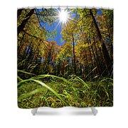 Autumn Forest Delight Shower Curtain