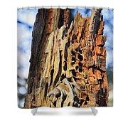 Autumn Knotty Tree Sculpture Shower Curtain
