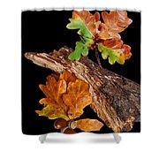 Autumn Oak Leaves And Acorns On Black Shower Curtain