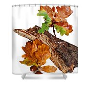 Autumn Oak Leaves And Acorns On White Shower Curtain