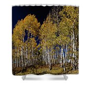 Autumn Walk In The Woods Shower Curtain