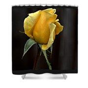 Autumn Yellow Rose Shower Curtain