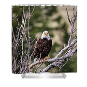 B13 Shower Curtain by Joshua Able's Wildlife
