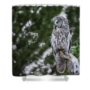 B47 Shower Curtain by Joshua Able's Wildlife