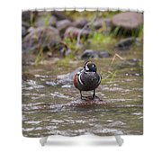 B63 Shower Curtain by Joshua Able's Wildlife