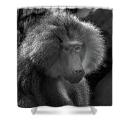 Baboon Black And White Shower Curtain