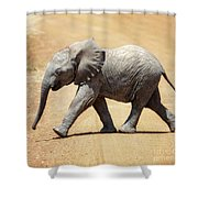 Baby African Elephant Shower Curtain