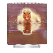 Baby Animal Series - Baby Duckling Shower Curtain