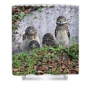 Baby Burrowing Owls Posing Shower Curtain