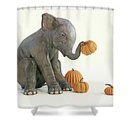 Baby Elephant And Pumpkins Shower Curtain