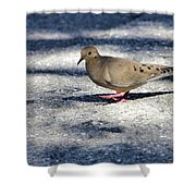 Baby Mourning Dove Shower Curtain