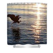 Bald Eagle At Sunset Shower Curtain