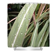 Bamboo And Water Shower Curtain