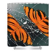 Banded Orange Butterfly. Shower Curtain