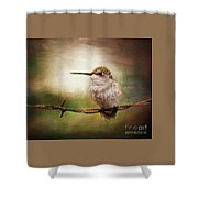 Barbed Wire Hummingbird Perch Shower Curtain