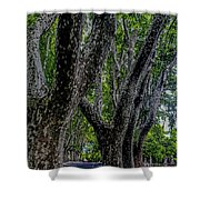 Bare Plane Tree Shower Curtain