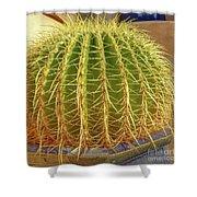 Barrel Cactus Royal Palms Phoenix Shower Curtain