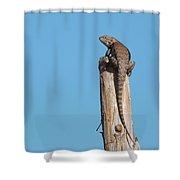 Basking Lizard Shower Curtain