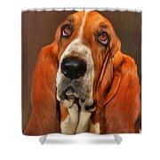 Basset Dog Portrait Shower Curtain
