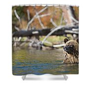 Bathing Blonde Grizzly Shower Curtain