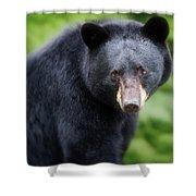 Bear Stare Shower Curtain