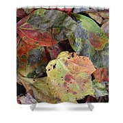 Beauti Fall Shower Curtain