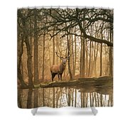 Beautiful Landscape Image Of Still Stream In Lake District Fores Shower Curtain