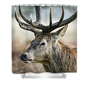 Beautiful Red Deer Stag Cervus Elaphus With Majestic Antelrs In  Shower Curtain