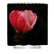 Beautiful Wet Rose Shower Curtain