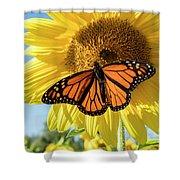 Beauty On The Sunflower Shower Curtain