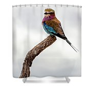Beauty With Wings, The Lilac Breasted Roller Shower Curtain