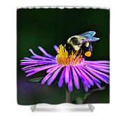 Bee On Purple Aster Shower Curtain by Meta Gatschenberger