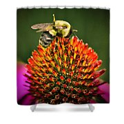 Bee On Red Cone Flower Shower Curtain by Meta Gatschenberger