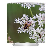 Bee Relaxing On A Flower. Shower Curtain