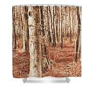 Beech Forest Shower Curtain