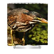 Behold The Hunter Shower Curtain