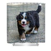 Bernese Mountain Dog Puppy 2 Shower Curtain
