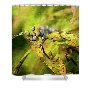 Berries And Aging Leaves 5709 Idp_2 Shower Curtain