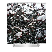 Berries And Snow Shower Curtain