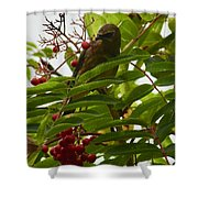 Berries And Waxwing Shower Curtain