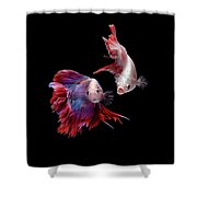 Betta0093 Shower Curtain